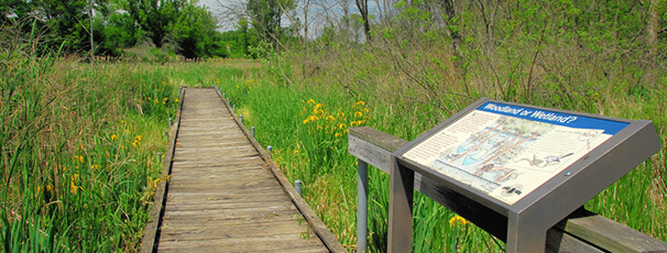 Ferson Creek Fen Nature Preserve